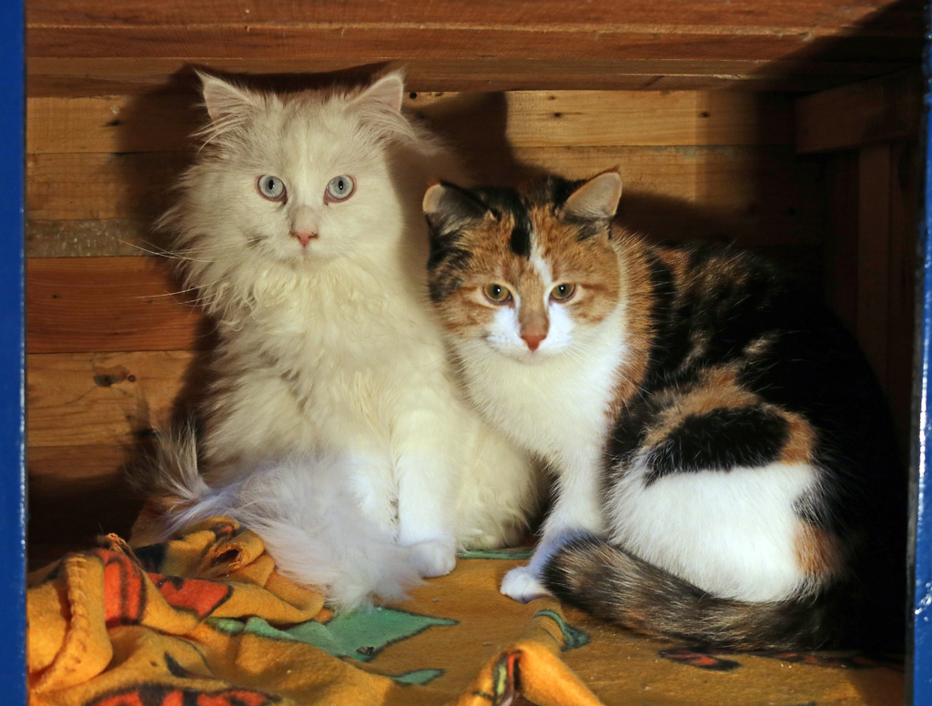 Elvis und Tiffy