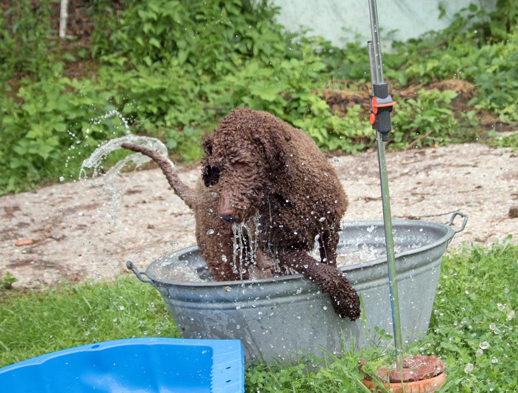 Bonito, die Wasserratte