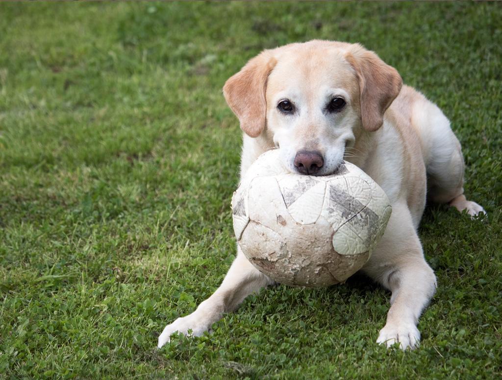 Lilli und der Ball