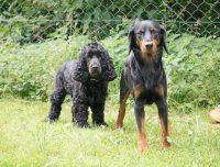 Proxie und Balu